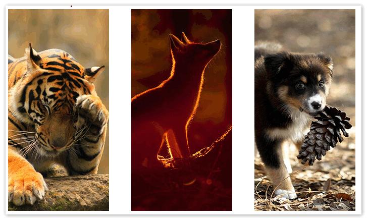 Аватарки животных для Вайбер